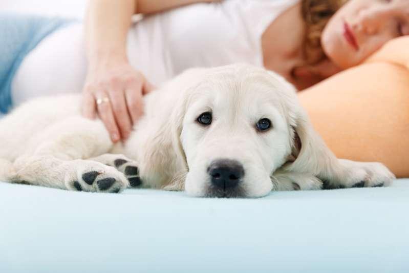 """""""Elle est un don du ciel"""" : par son comportement étrange, une husky prévient sa maîtresse qu'elle a un cancerWoman Sleep In Bed With Dog"""
