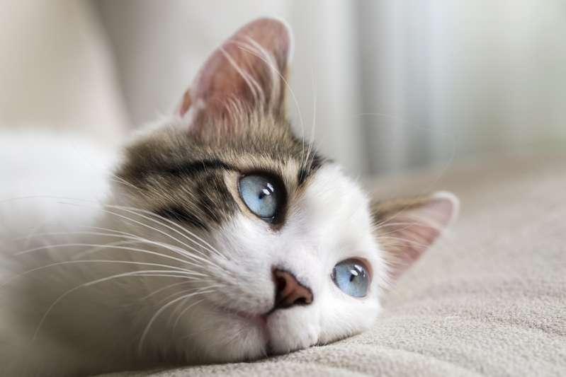 Um gatinho teve a reação mais hilária possível ao perceber que seu amiguinho cão soltou um pum enquanto dormia!