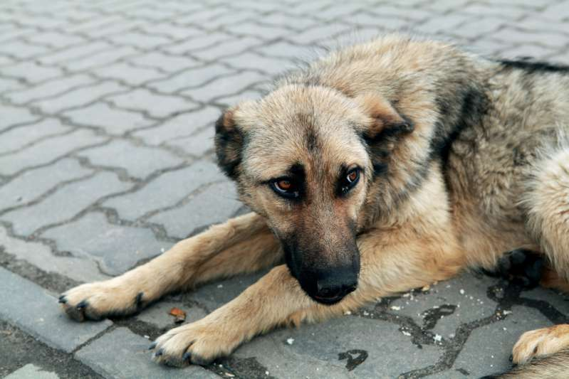 Пёс почти месяц возвращался к сгоревшему дому в поисках хозяина. Имеет ли история счастливый конец?
