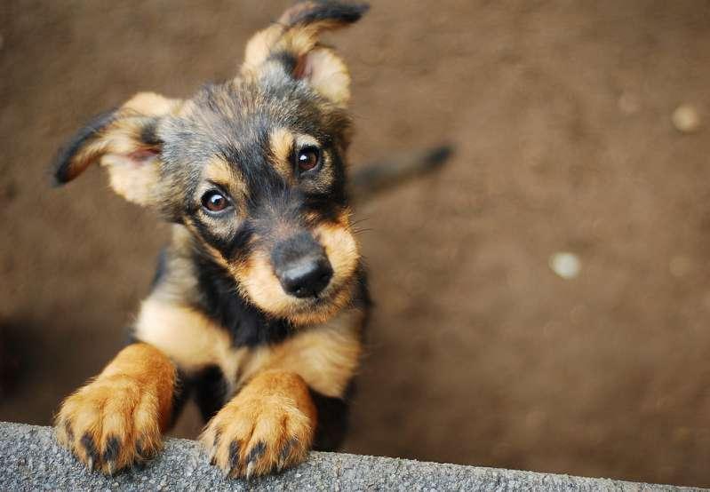 Un soldado americano adoptó un perro en Irak e hizo de todo para llevárselo a casa