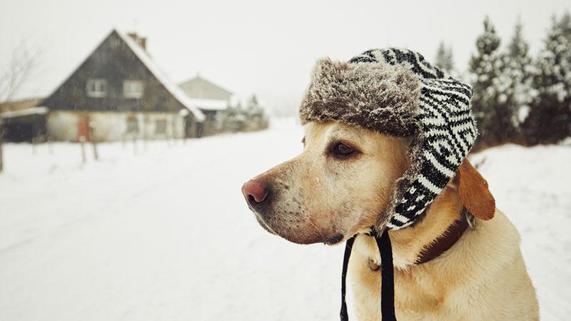 De partir o coração: cachorra abandonada pelos antigos donos passa um mês esperando que eles voltem para buscá-la
