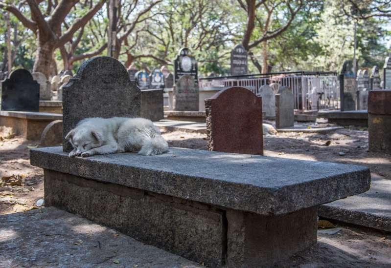 Réunis pour toujours ! Les autorités de New-York ont autorisé d'enterrer des animaux auprès de leurs propriétaires