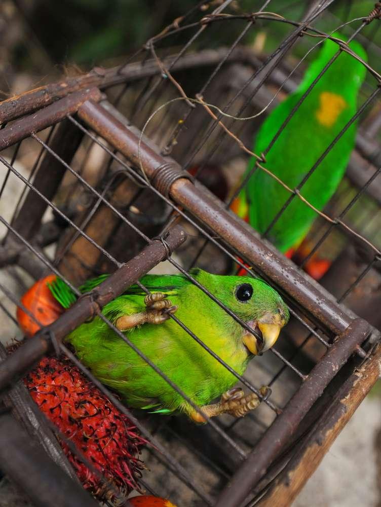 Die Auswirkungen des Vogelschmuggels: Behörden finden und retten über 500 Vögel, die illegal in winzigen Käfigen geschmuggelt wurden