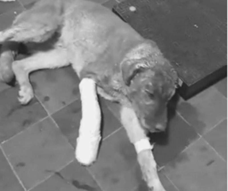 Valiente perrito héroe arriesgó su vida para salvar a una familia completa de morir en un incendio