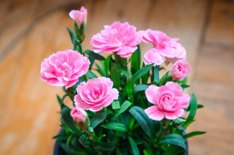 Flores para ter uma sorte boa: as plantas certas para cada signo do zodíaco