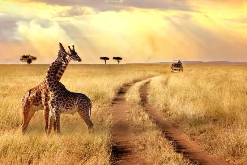 Невероятно, но факт: что общего между шеей человека и жирафа