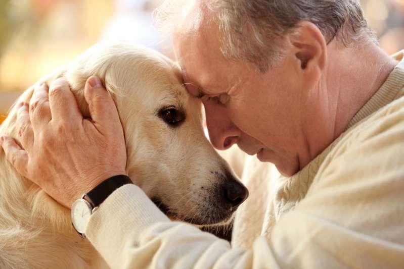 Cette chienne errante maltraitée et négligée a l'air de se porter incroyablement bien quelques mois après son adoption