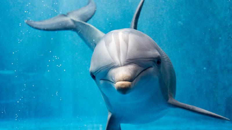 Qual è lo spirito animale che ti protegge, secondo lo zodiaco?ssdsa
