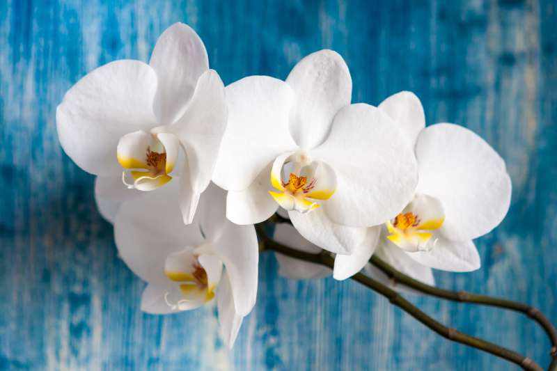 How To Properly Water Your Beautiful Orchids? Is The Ice Cubes Trick Good Or Bad?How To Properly Water Your Beautiful Orchids? Is The Ice Cubes Trick Good Or Bad?