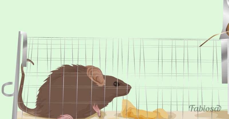 No hay invitados inesperados: 9 métodos para mantener a los ratones alejados de la casa