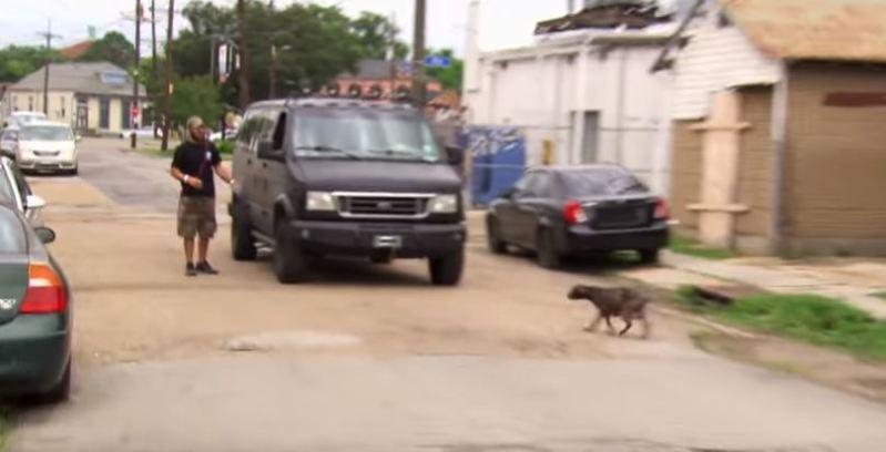 Esta perrita estaba mal herida, pero eso no evitó que condujera a los rescatistas hasta sus cachorros