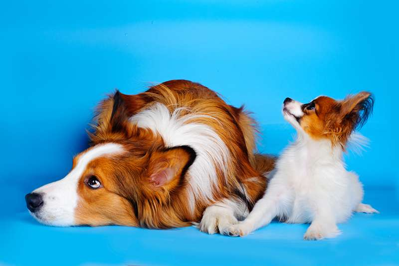 Moment Of Truth! Studies Have Confirmed That Dogs Can Sense Bad People. How?