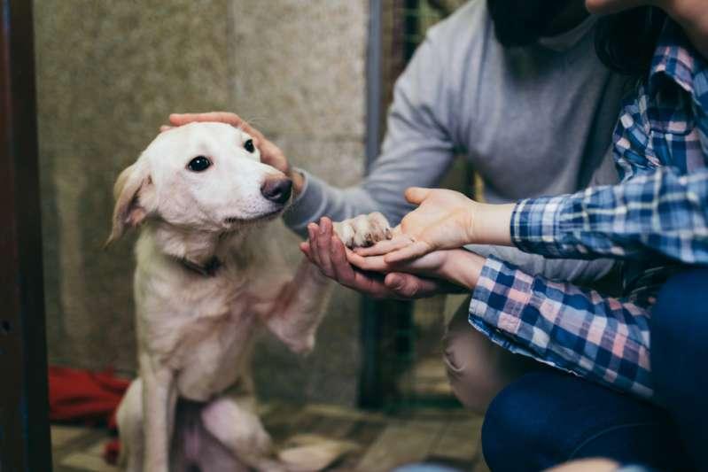 80-летняя старушка потеряла любимого пса. Он нашелся там, где никто не ожидал!