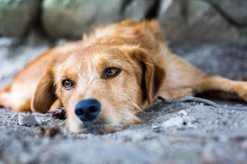 How To Help An Abandoned Dog: Shelter Workers Find Malnourished Dog With A Heartbreaking Letter From Her OwnerHow To Help An Abandoned Dog: Shelter Workers Find Malnourished Dog With A Heartbreaking Letter From Her Owner