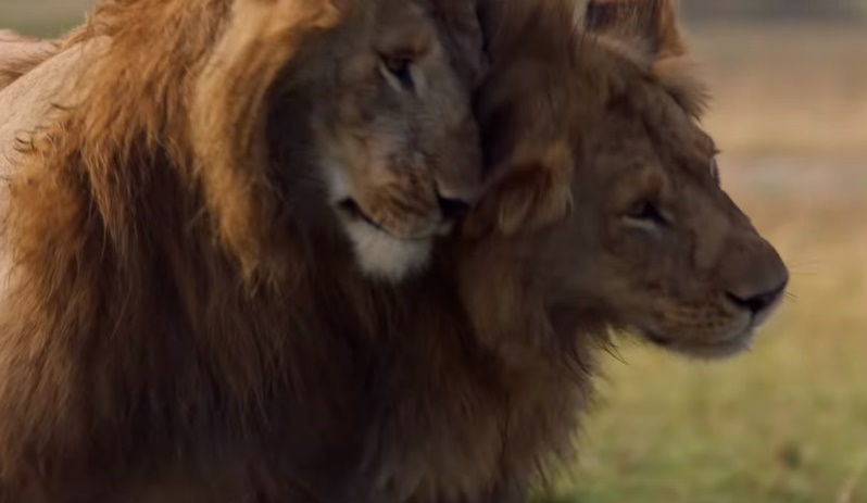 More Humane Than A Human: Touching Moment Of Lion's Gratitude After His Friend Saved Him From 20 Hyenas