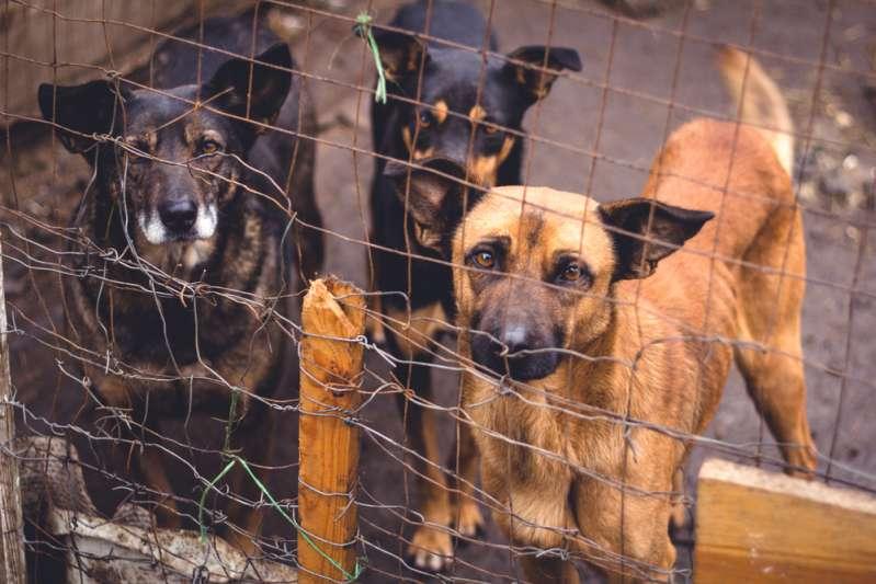 Mulher abandona 7 cachorros em um saco de lixo. Após ser presa, polícia descobre mais 38 animais em sua casa