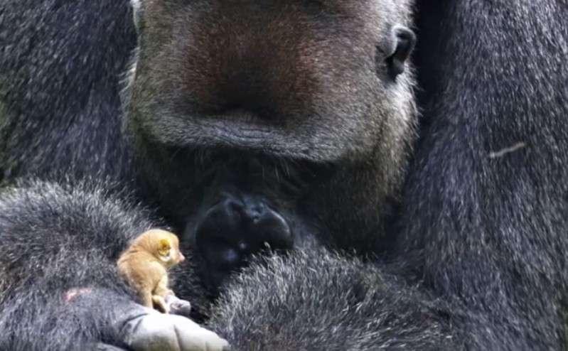 primat monkey