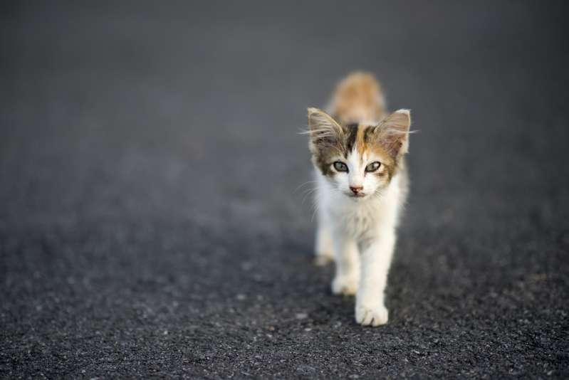 Estudio comprueba que la razón la cual los gatos son solitarios se debe a un error en nuestra conductaEstudio comprueba que la razón la cual los gatos son solitarios se debe a un error en nuestra conductaEstudio comprueba que la razón la cual los gatos son solitarios se debe a un error en nuestra conducta
