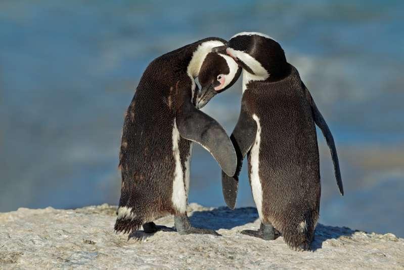 Hasta los animales aman sin prejuicio: pareja de pingüinos gay adoptan huevo en el zoológicoHasta los animales aman sin prejuicio: pareja de pingüinos gay adoptan huevo en el zoológicoHasta los animales aman sin prejuicio: pareja de pingüinos gay adoptan huevo en el zoológicoHasta los animales aman sin prejuicio: pareja de pingüinos gay adoptan huevo en el zoológico