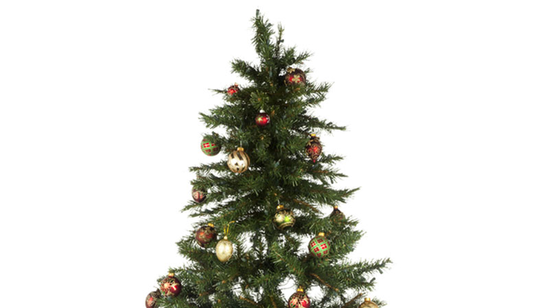 Un chico puso un árbol artificial entre un grupo de árboles naturales. ¿Logras distinguirlo?