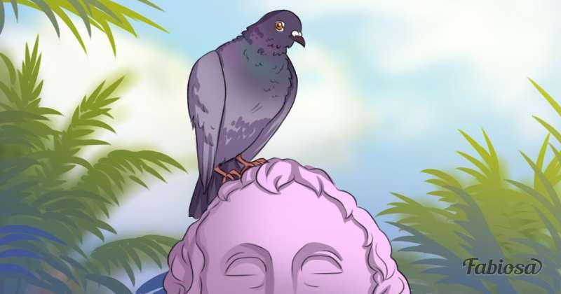 Do pombo transmissao doenca