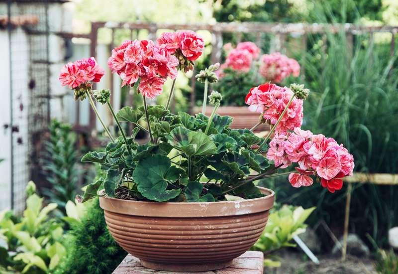 Mit diesem einfachen Trick wirst du nie wieder eine Pflanze in deinem Zuhause absterben sehen!Mit diesem einfachen Trick wirst du nie wieder eine Pflanze in deinem Zuhause absterben sehen!