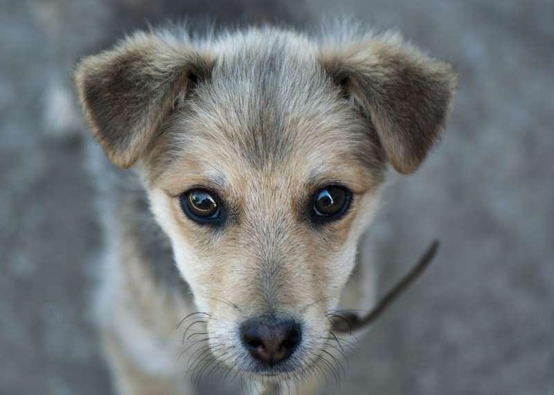 Épuisé, un chien errant s'endort sur l'épaule de son sauveur en réalisant qu'il a trouvé un foyer