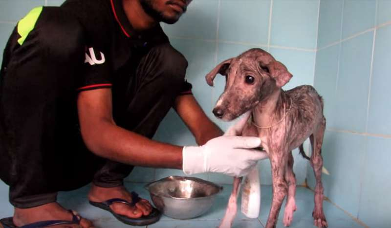 Frightened And Exhausted, He Was Found In A Bag. Six Weeks After, The Dog Became Simply Unrecognizable!