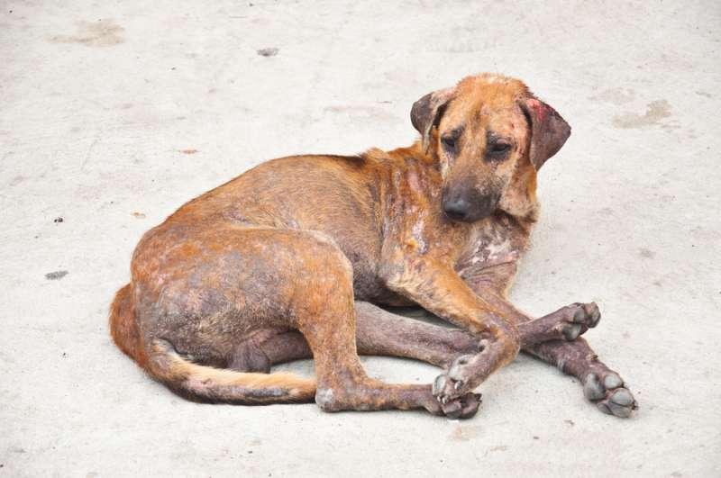 Als 4 Jungs einen verlassenen, misshandelten Hund fanden, wussten sie, dass sie etwas tun mussten und ihre fürsorgliche Tat wurde im Anschluss viral
