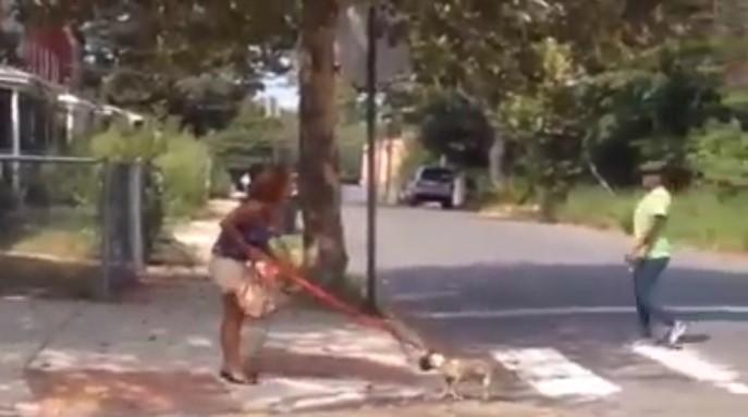 Perrito se convierte en escudo humano al ser usado como instrumento de defensa personal
