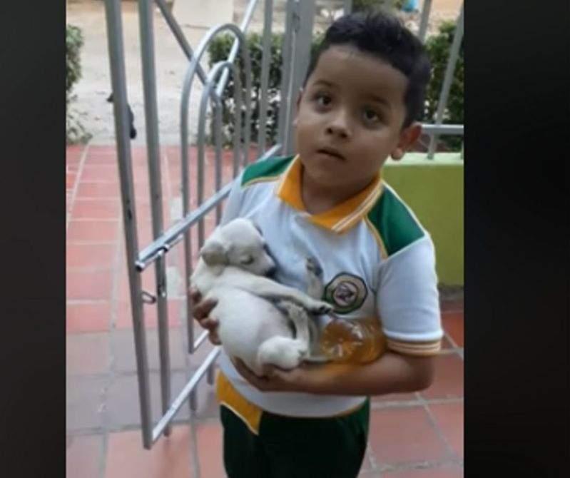 """""""Stava piangendo lì fuori"""": bimbo viene mandato al supermercato ma torna con un cagnolino abbandonato tra le braccia"""