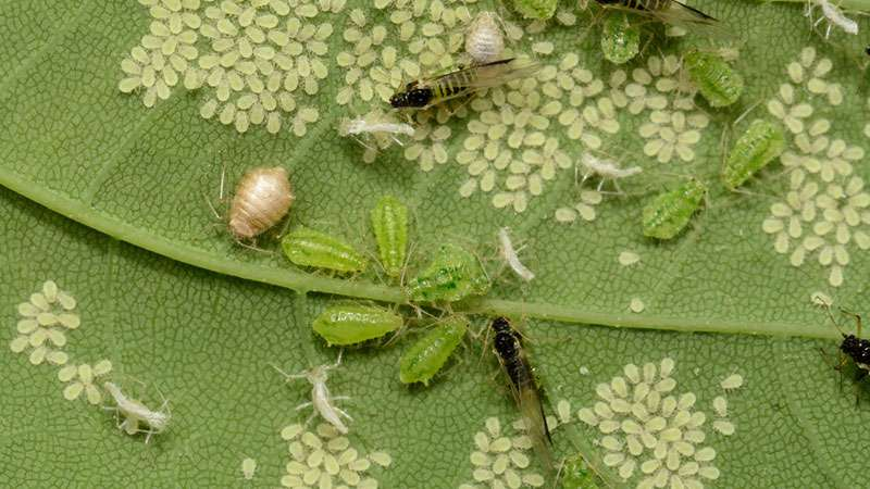 5 эффективных способов избавиться от насекомых в вашем доме5 эффективных способов избавиться от насекомых в вашем домеgarden insects