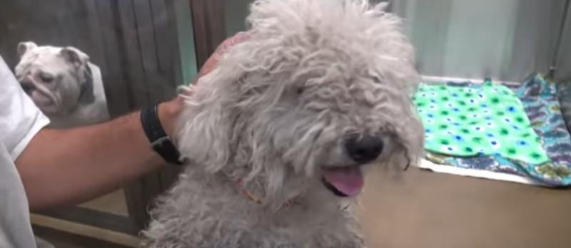 Esse cãozinho estava depressivo e sem esperanças até encontrar um dono que fez uma verdadeira transformação na sua vida!