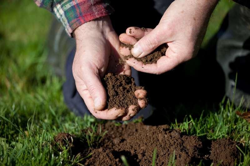 Wenn das Gemüse in deinem Garten fast reif ist, ist es wichtig sie vor verschiedenen Insekten und Käfern zu schützen.