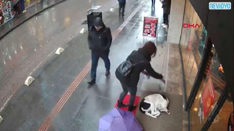 Une femme a vu un chien errant frigorifié dans la rue et sa réaction a rapidement fait le buzz