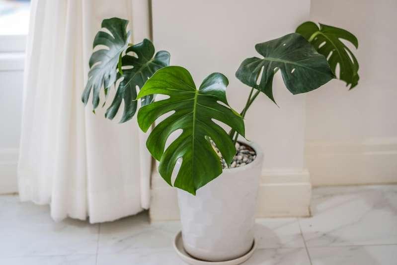 Орхидея или кактус? Комнатное растение-талисман для каждого знака зодиакаОрхидея или кактус? Комнатное растение-талисман для каждого знака зодиакаОрхидея или кактус? Комнатное растение-талисман для каждого знака зодиакаОрхидея или кактус? Комнатное растение-талисман для каждого знака зодиакаОрхидея или кактус? Комнатное растение-талисман для каждого знака зодиакаОрхидея или кактус? Комнатное растение-талисман для каждого знака зодиакаОрхидея или кактус? Комнатное растение-талисман для каждого знака зодиака