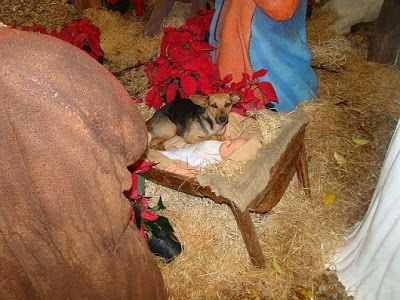 Ein streunender Welpe, der friedlich schlafend in einer Weihnachtskrippe gefunden wurde, bricht sogar das kälteste Herz