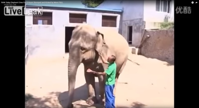 For 5 Traumatic Hours, This Baby Elephant Cried Alone As His Mother Refused To Love Him