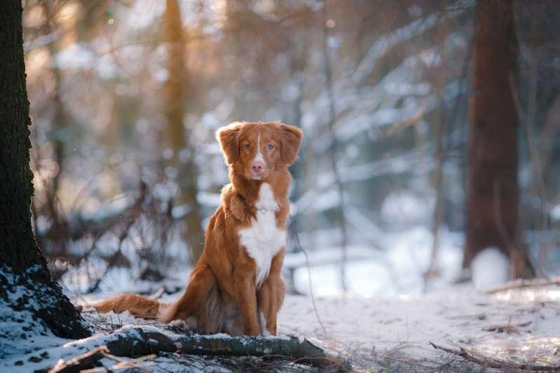 La Pennsylvanie vote une loi interdisant aux gens de laisser leurs chiens dehors par mauvais temps
