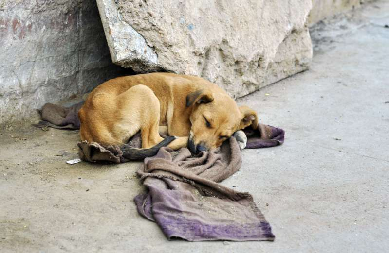 Ein ausgesetzter Hund, der mit Spray besprüht und unterernährt in eine Gasse gefunden wurde, wird wieder ganz der Alte