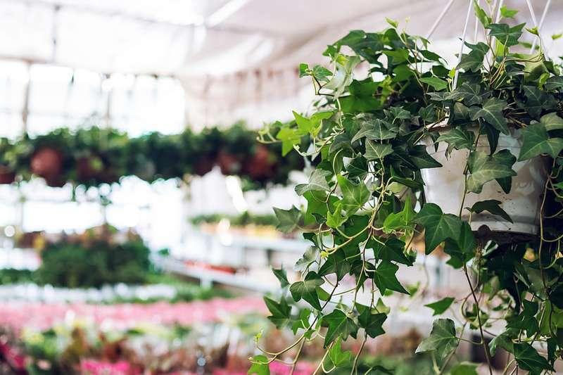 5 piante da mettere in camera da letto che alleviano lo - Piante in camera ...