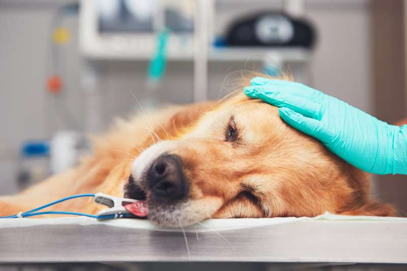 How Can We Prevent Animal Abuse? By Learning The Most Common Signs And Reporting Cruelty To Animalsdog at the vet