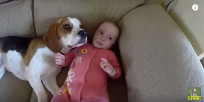 Charming Video Of A Dog Babysitting Proves That Pups Reward Us With The Purest Love