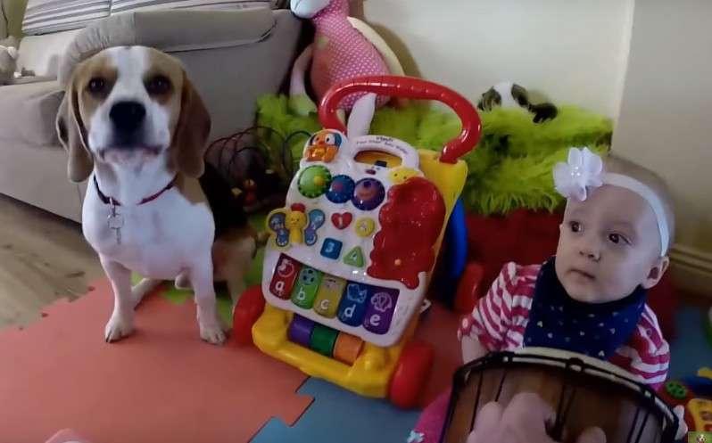 Charlie ist ein gutes Beispiel für einen Hund, der aktiv am Familienleben teilnimmt.Charlie ist ein gutes Beispiel für einen Hund, der aktiv am Familienleben teilnimmt.Charlie ist ein gutes Beispiel für einen Hund, der aktiv am Familienleben teilnimmt.