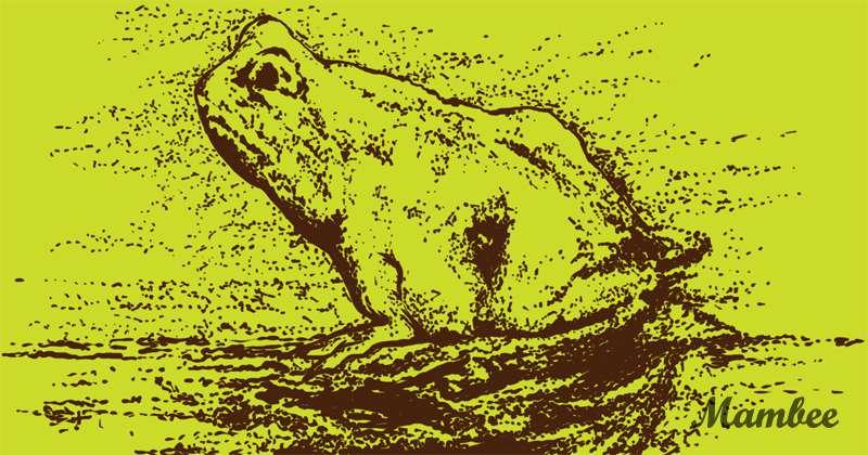 Une grenouille ou un cheval ? Pourquoi ne chercheriez-vous pas à le découvrir ?