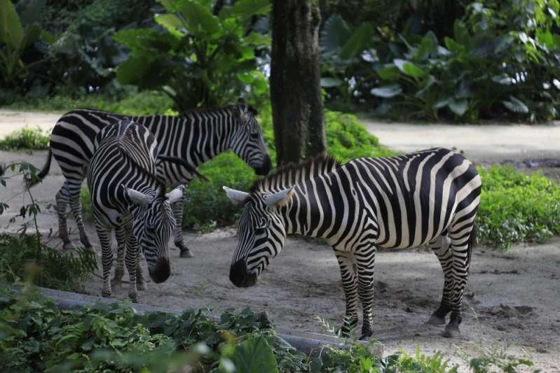 Современный зоопарк: обратная сторона жизни животных, которую посетителям не показывают