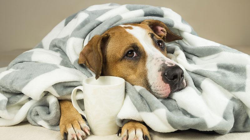 Protege a tus mascotas en invierno, ellos también sienten frío y pueden enfermarse fácilmente