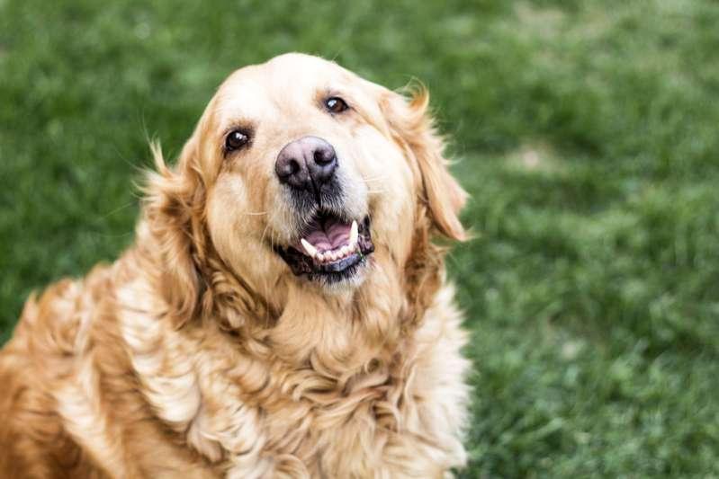 Dieser Tolle Große Hund Geht Jeden Tag Mit Seinem Kleinen Freund Spazieren Und Die Beiden Sehen Einfach So Süß Aus!Dieser Tolle Große Hund Geht Jeden Tag Mit Seinem Kleinen Freund Spazieren Und Die Beiden Sehen Einfach So Süß Aus!