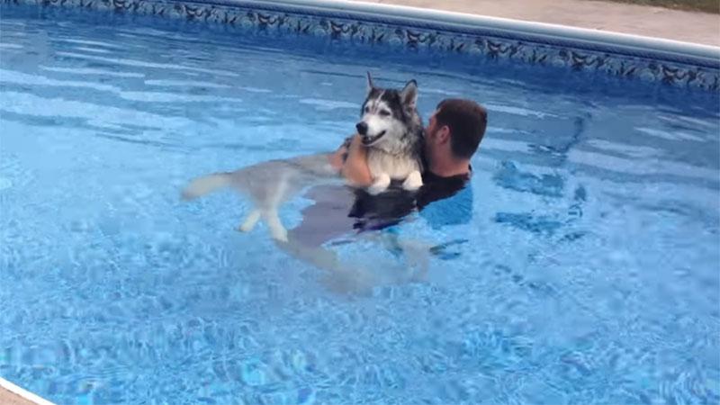 Puso a su perro viejito en la piscina para que volviera a caminar y logró el resultado esperado