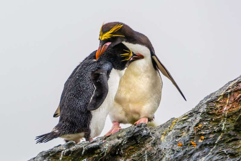 They Sure Take Commitment Seriously: 10 Monogamous Animals That Mate For LifeThey Sure Take Commitment Seriously: 10 Monogamous Animals That Mate For LifeThey Sure Take Commitment Seriously: 10 Monogamous Animals That Mate For LifeThey Sure Take Commitment Seriously: 10 Monogamous Animals That Mate For LifeThey Sure Take Commitment Seriously: 10 Monogamous Animals That Mate For LifeThey Sure Take Commitment Seriously: 10 Monogamous Animals That Mate For LifeThey Sure Take Commitment Seriously: 10 Monogamous Animals That Mate For LifeThey Sure Take Commitment Seriously: 10 Monogamous Animals That Mate For LifeThey Sure Take Commitment Seriously: 10 Monogamous Animals That Mate For Life